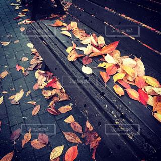 ベンチに積もる紅葉の写真・画像素材[744397]