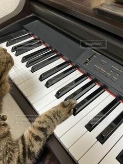 ピアノを弾く猫の写真・画像素材[3791957]