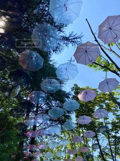 たくさんの開いた傘と飛行機の写真・画像素材[4529911]