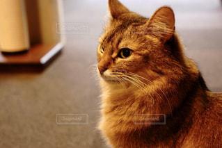猫カフェにての写真・画像素材[737932]