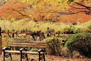 公園の真ん中に座っている木製のベンチの写真・画像素材[745786]