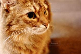 近くにカメラを見て猫のアップの写真・画像素材[753212]