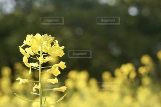 近くの花のアップの写真・画像素材[761897]