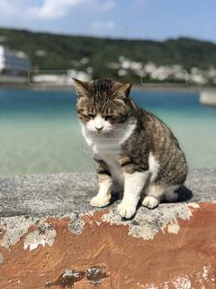 猫の写真・画像素材[1025335]