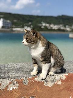 防波堤にいた猫です。の写真・画像素材[1025353]