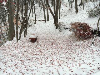 紅葉と雪 - No.738714