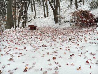 紅葉と雪 - No.738716