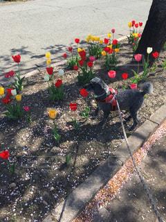 いつもの道に、お花が咲いた!の写真・画像素材[738046]