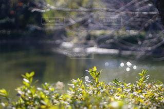 水面の写真・画像素材[912281]