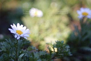 花の写真・画像素材[912282]