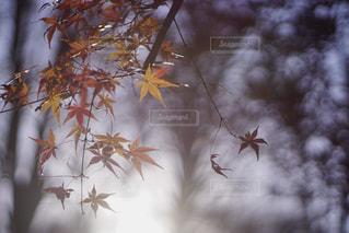 木漏れ日の色の写真・画像素材[912283]