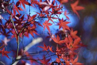 浮かぶ赤の写真・画像素材[912284]