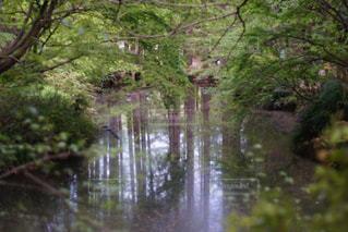 生田緑地の写真・画像素材[1132259]