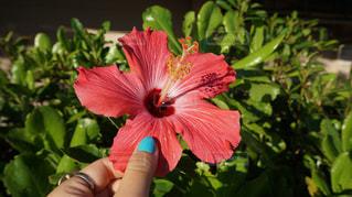 花を持っている手 - No.921865