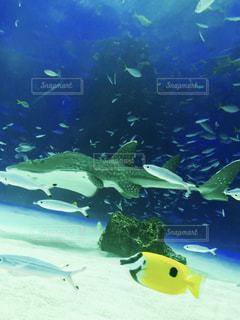 緑の水中の写真・画像素材[739335]