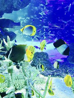 サンゴの水中ビューの写真・画像素材[739339]