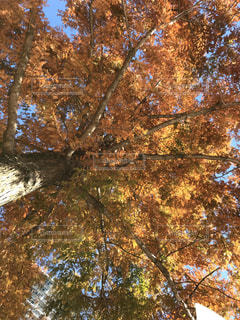 近くの木のアップの写真・画像素材[902039]