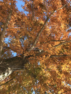 初冬の木の写真・画像素材[902041]