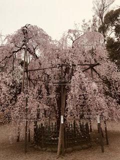 春の写真・画像素材[1096071]