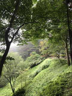 森の大きな木の写真・画像素材[740223]