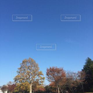 秋の空の写真・画像素材[740902]