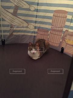 テントの中の猫の写真・画像素材[743216]