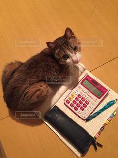 家計簿の上に乗る猫の写真・画像素材[743217]