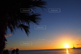 ヤシの木と沈む夕日の写真・画像素材[741106]