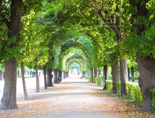 公園の緑のアーチの写真・画像素材[741732]