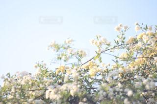 良い香りに誘われて。の写真・画像素材[752243]