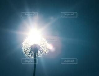 空の光の写真・画像素材[762081]
