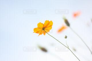 近くの花のアップの写真・画像素材[775547]