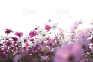 植物にピンクの花の写真・画像素材[791747]