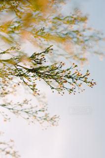 木の枝にとまった鳥の写真・画像素材[799539]