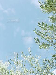 自然の写真・画像素材[827049]