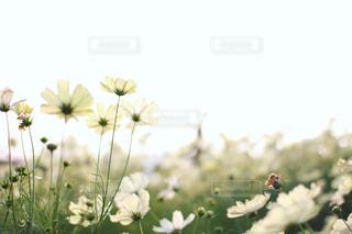 花の写真・画像素材[1582445]
