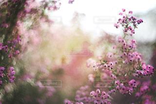近くに紫の花のアップの写真・画像素材[1831507]