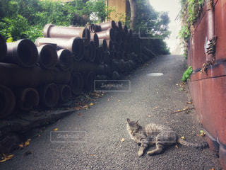 常滑の土管とネコの写真・画像素材[2663956]