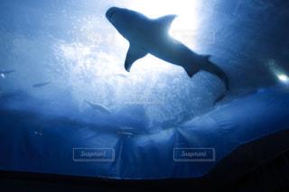 暗闇の中でサメ - No.741891