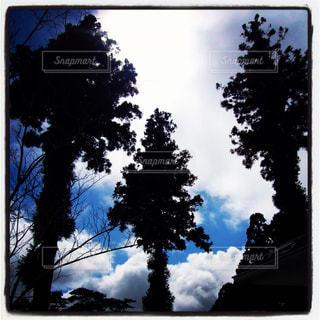 三本の木の写真・画像素材[742018]