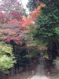 紅葉色づくの写真・画像素材[742388]