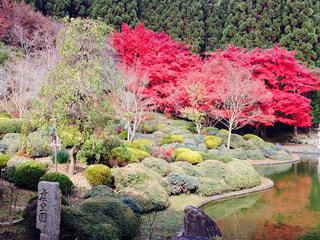 庭の植物の写真・画像素材[742625]