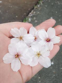 花を持っている手の写真・画像素材[742110]