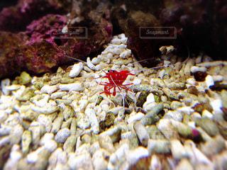 近くに魚のアップの写真・画像素材[743722]