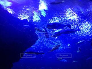 水の中の魚の群れの写真・画像素材[743726]