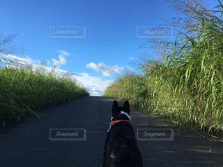 お散歩の写真・画像素材[743993]
