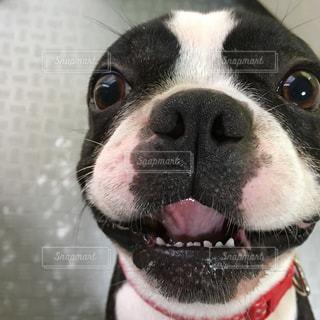 近くにカメラを見て犬のアップの写真・画像素材[756871]