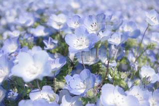近くの花のアップの写真・画像素材[845244]