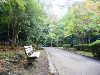 公園のベンチ - No.862236