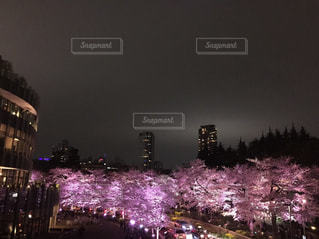 夜の桜並木の写真・画像素材[862360]